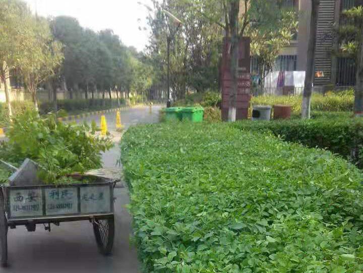 御景城陕西园林养护施工案例