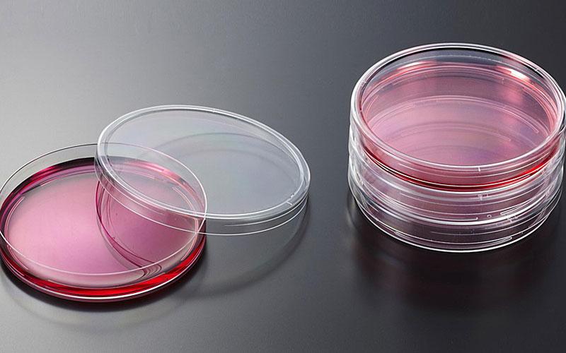 一次性细菌培养皿