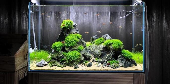 苔藓的种植方法