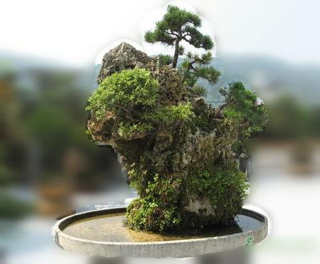 如何用上水石做假山盆景?