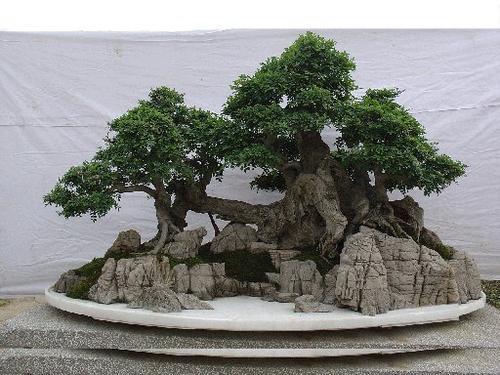 假山盆景苔藓制作方法有哪些?