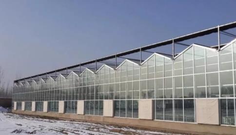 现在农业新方式:智能玻璃温室,你有所了解吗?