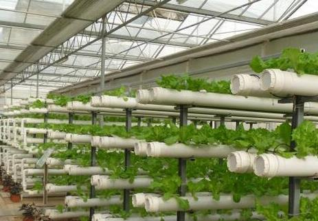 温室大棚种植的冬季蔬菜如何管理?