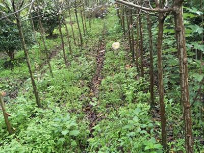怎么对成都北美海棠进行栽种