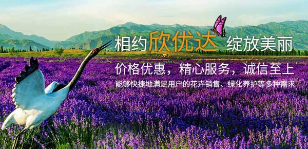西安欣优达花卉工程有限公司