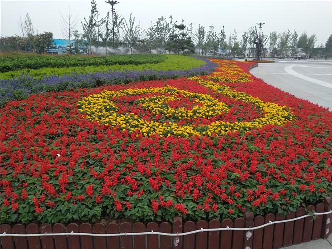 西安昆明池花卉工程案例