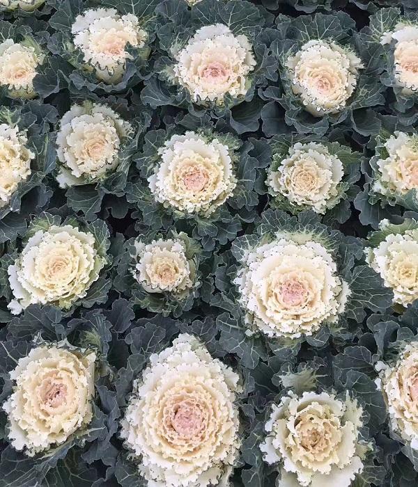 西安四季草花种植