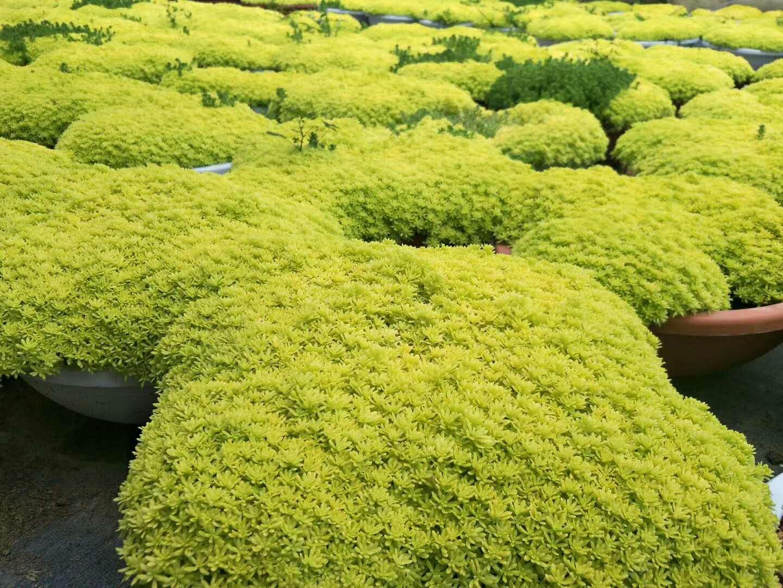 西安四季草花种植方案有哪些呢?另外种植四季草花后要怎么培育?