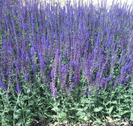 种植和养护草花注意事项——西安草花基地