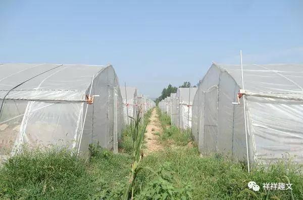 西安蝎子养殖场