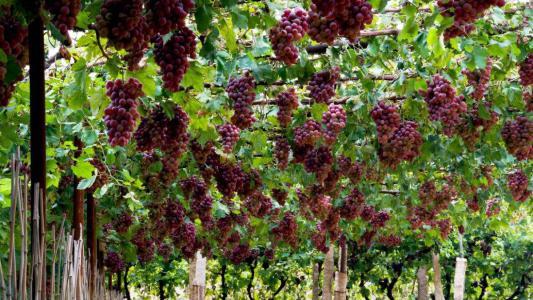 直播带货让吐鲁番农产品更畅销