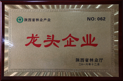 陕西省林业产业龙头企业
