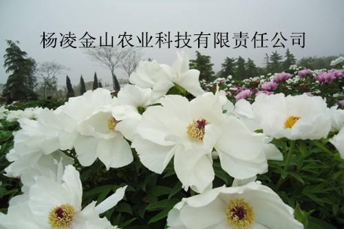 陕西GPK钱龙捕鱼