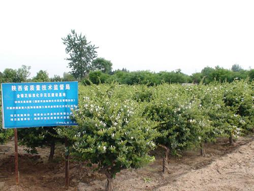 杨凌二项林业科技成果获陕西省科学技术成果认定