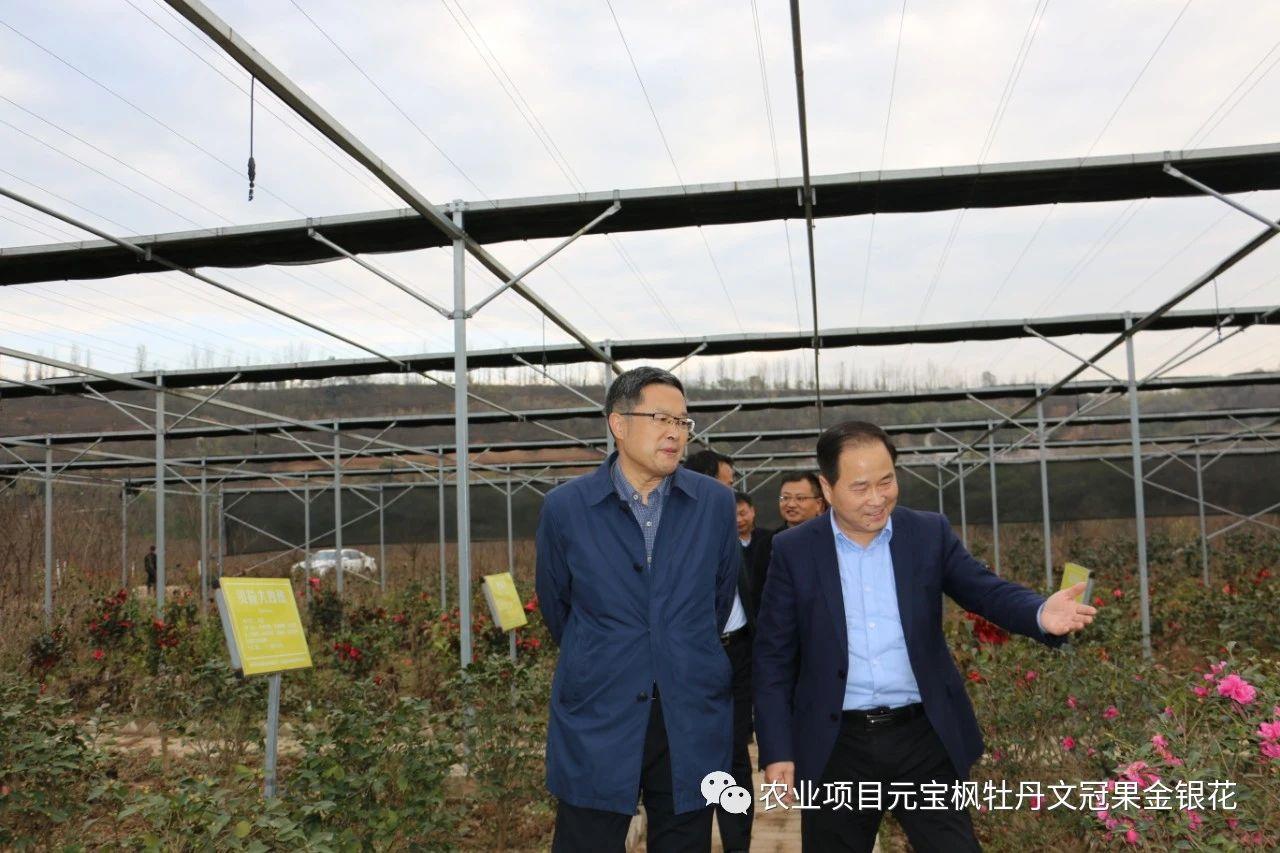 楊凌示范區黨工委副書記劉天雄一行來楊凌金山花卉產業園調研指導工作