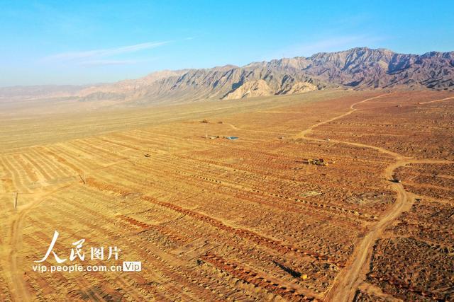 甘肅張掖:元寶楓國家儲備林建設項目加速推進