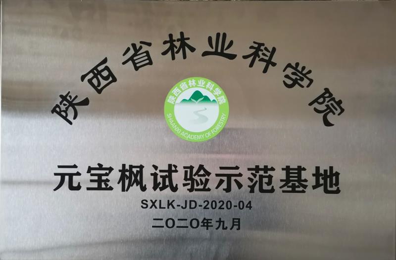 陕西省林业科学院元宝枫试验示范基地