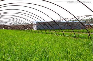 成都温室大棚案例