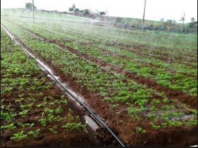肥水一体化公司