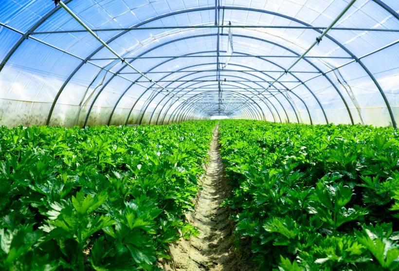 外遮阳系统在成都温室大棚中的应用