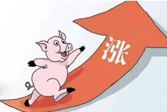 猪肉涨价到底有什么内情?相信很多宝妈都知道!