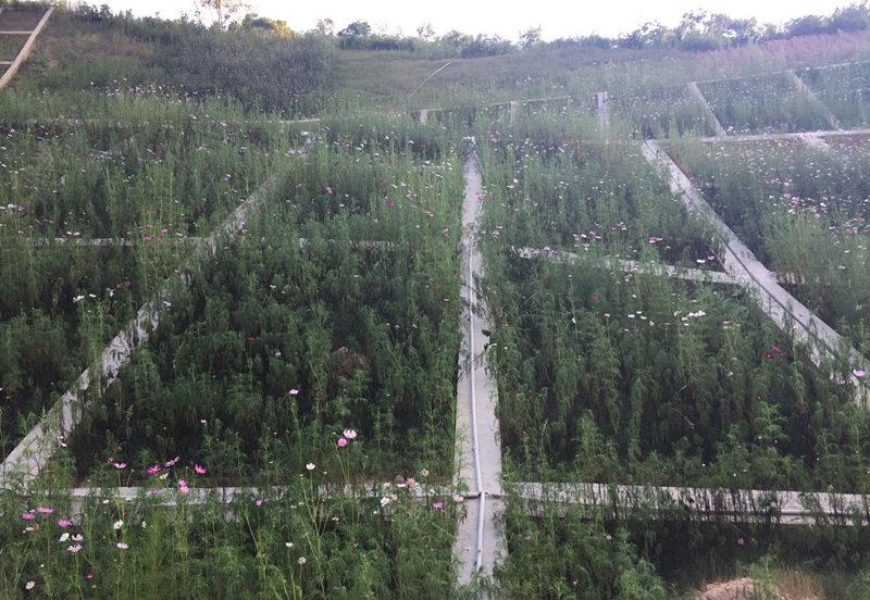 华辰园林高边坡防护治理施工