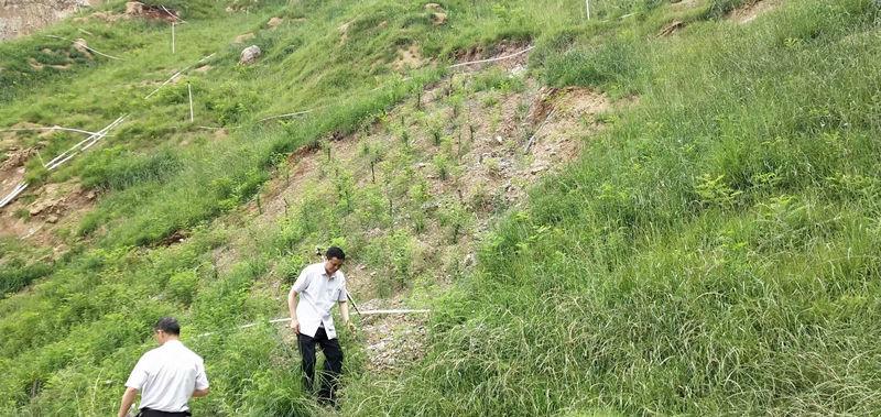 陜西園林綠化養護
