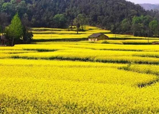 菜籽油的生长环境对其营养价值影响有多大