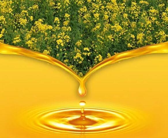 作为三大食用油之一的菜籽油,营养价值表你了解吗