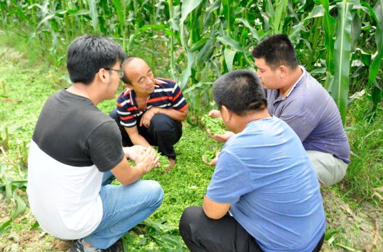 擴張青貯機及莖穗兼收玉米機市場