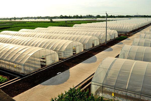 南阳润达与蔬菜基地合作