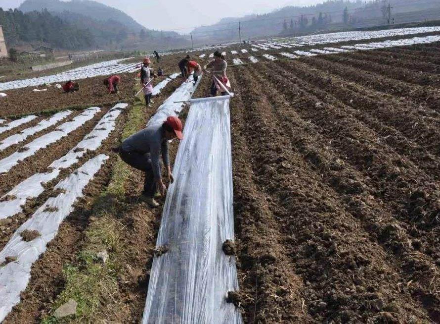 润达与苗木种植合作