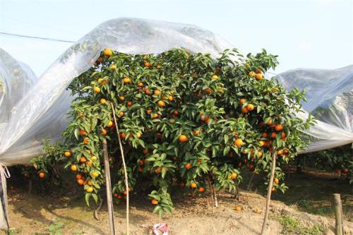 润达与种植瓜果基地合作