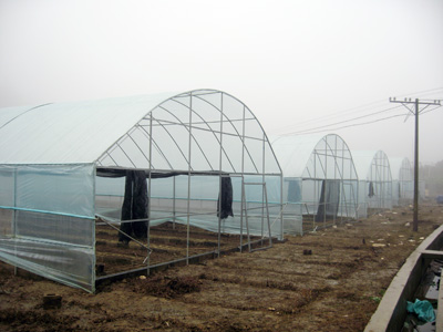 南阳某农业园区使用棚膜效果展示
