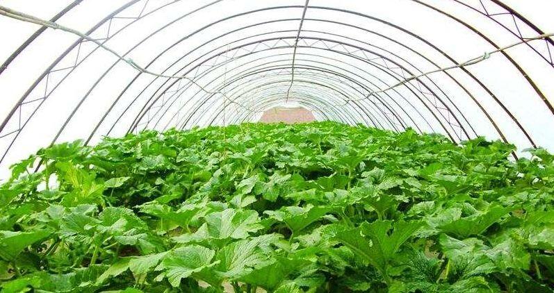 对于大棚农膜常见覆盖形式有哪些呢?主要有这3种!