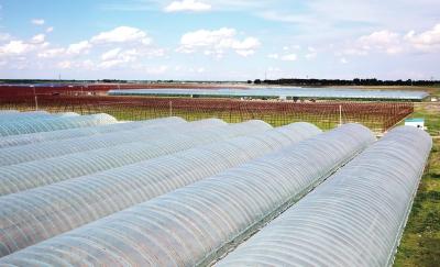 雨季该维护保养棚膜?保护农作物看看润达塑业都是怎么做的吧