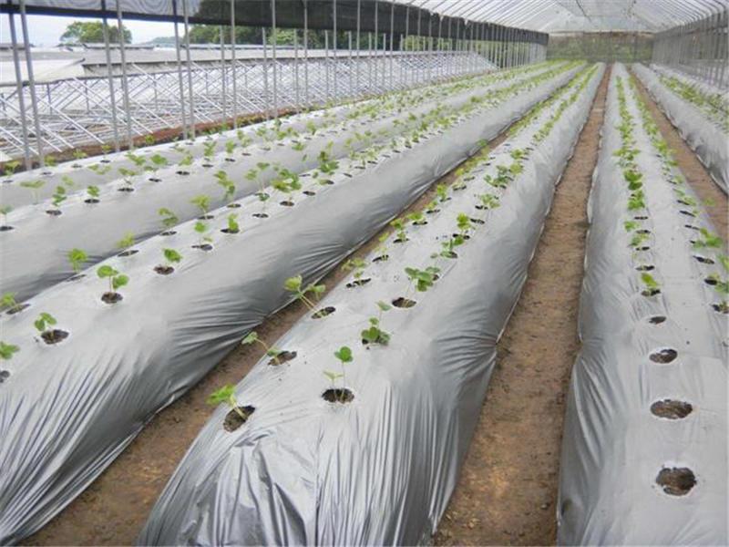 农膜生产厂家:农膜的使用注意事项