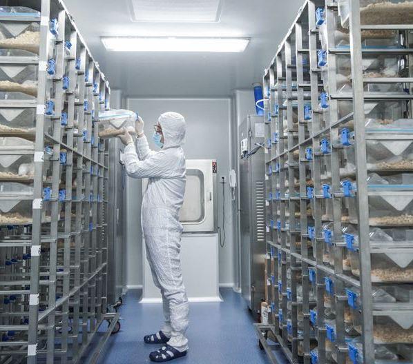 其他安全生产、职业卫生与环境技术咨询服务