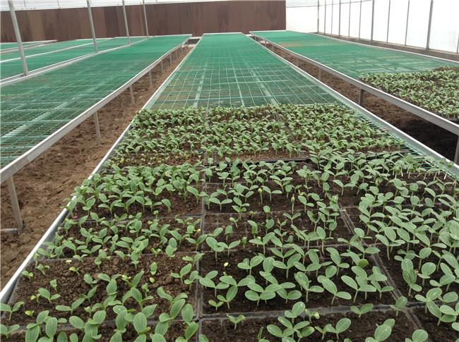 成都蔬菜温室大棚