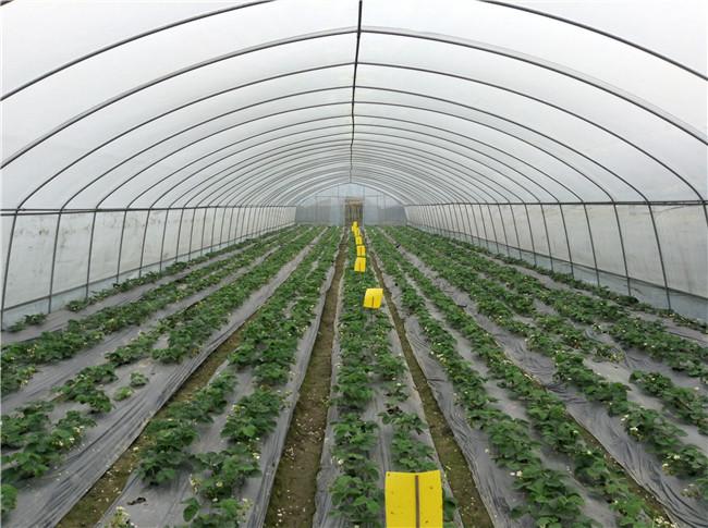 成都蔬菜大棚合作客户