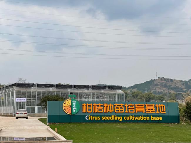 南充顺庆区柑橘园种苗培育基地联动薄膜温室和玻璃大棚