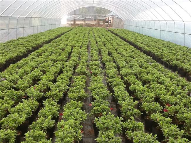 成都蔬菜大棚如何防范春季大风?