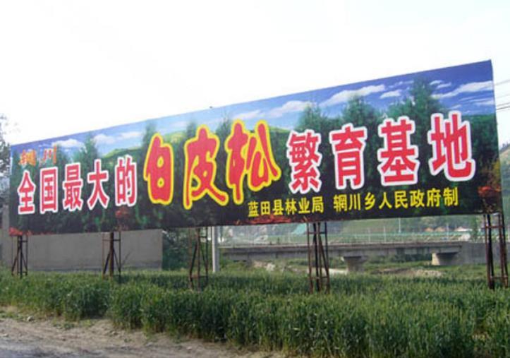 客户对蓝田县松绿白皮松苗圃的评价