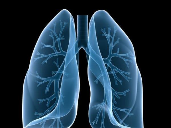 兰州百合润肺
