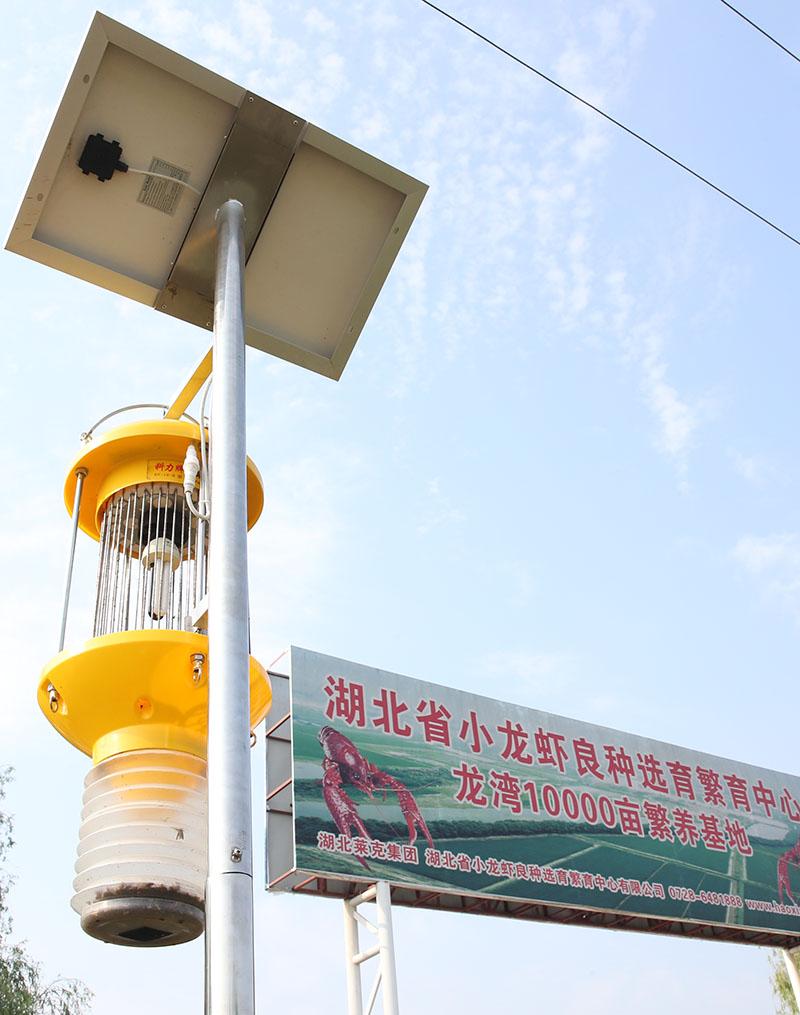 太陽能自動清蟲殺蟲燈-潛江稻蝦共作基地