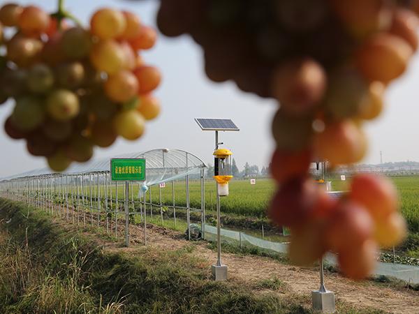 太陽能殺蟲燈