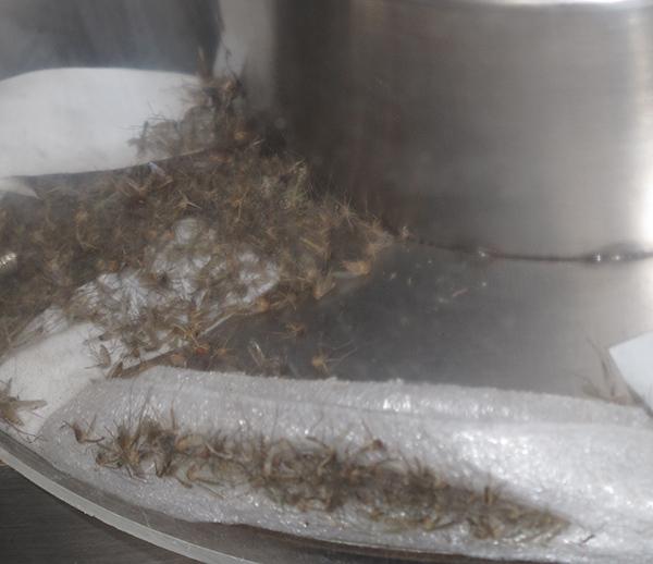 環衛景觀滅蚊蠅器