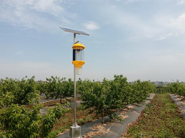 湖北太陽能殺蟲燈-果園