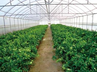 黑河村:特色大棚种植开启村民致富路