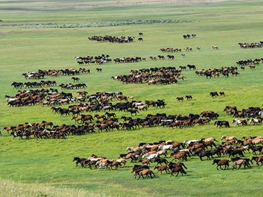 中国.大游牧民族步入马背生活